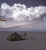 Camels and her son in the desert at night Royalty Free Stock Image