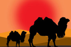 Camels illustration. Two camels in a desert on sunrise time colored illustration stock illustration