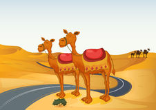 Camels. Illustration of camels in a desert and road Stock Photos