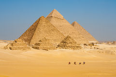 Camels Line Walk Pyramids All Royalty Free Stock Photography