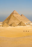 Camels Line Walk Pyramids All Vertical Royalty Free Stock Image