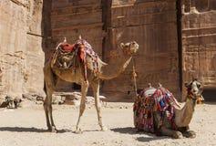 Camels near Royal tombs. Petra. Jordan. Stock Photos
