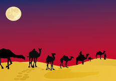 Camels in night desert Royalty Free Stock Photo
