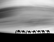Camels in night. Royalty Free Stock Photography