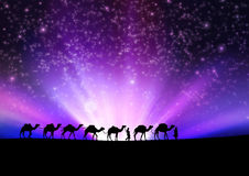 Camels in night. Stock Photos