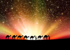 Camels in night. Royalty Free Stock Photo
