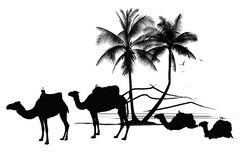 camels and palm tree. Very detailed vector illustration of african desert with camels and palm tree  - each element can be edited separately Royalty Free Stock Photography