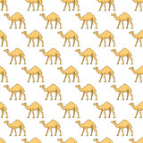 Camels pattern Royalty Free Stock Photography