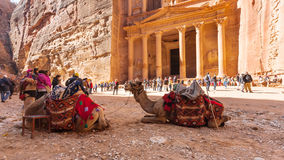 Camels and people near al-Khazneh temple in Petra Royalty Free Stock Photos