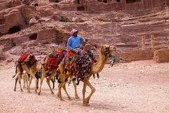 Camels Petra Jordan Royalty Free Stock Photos