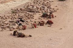 Camels at Petra, Jordan. Camels resting at Petra, Jordan royalty free stock photo