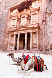 Camels of Petra. Two camels in front of Al Khazneh in Petra, Jordan Royalty Free Stock Photography