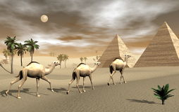 Camels and pyramids - 3D render Stock Photography