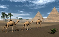Camels and pyramids - 3D render Royalty Free Stock Photo