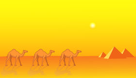 Camels and Pyramids Royalty Free Stock Images