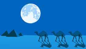 Camels and Pyramids Stock Photography