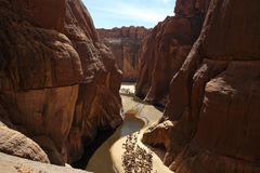 Camels rest in a canyon near the water stock image