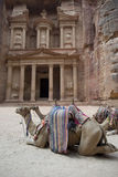 Camels rest in front of Al Khazneh Treasury ruins, Petra, Jordan Royalty Free Stock Photography