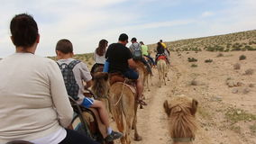 Camels ride in Israel stock footage