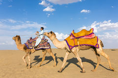 Camels with a rider in Thar desert, Rajasthan, India Stock Photography