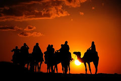 Camels with riders in sunset. Photo of a group of camel riders in the desert during sunset Royalty Free Stock Images