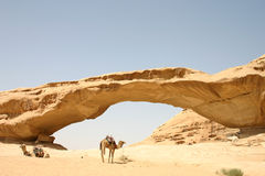 Camels at Rock Bridge Stock Images