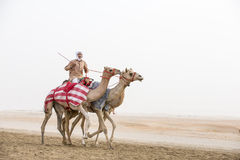 Camels in Rub al Khali Desert at the Empty Quarter, in Abu Dhabi. Rub al Khali Desert, Abu Dhabi, United Arab Emirates, July 22nd, 2017: man riding camels in a Royalty Free Stock Photography