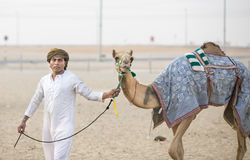 Camels in Rub al Khali Desert at the Empty Quarter, in Abu Dhabi. Rub al Khali Desert, Abu Dhabi, United Arab Emirates, July 22nd, 2017: men training camels at a Stock Images