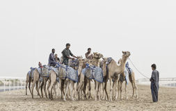 Camels in Rub al Khali Desert at the Empty Quarter, in Abu Dhabi. Rub al Khali Desert, Abu Dhabi, United Arab Emirates, July 22nd, 2017: men training camels at a Royalty Free Stock Photos