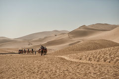 Camels safari at Mingsha sand dunes. Dunhuang, China - June 29, 2012: Convoy of Camels carrying tourists at famous Mingsha sand dunes on the silk road outside Royalty Free Stock Images