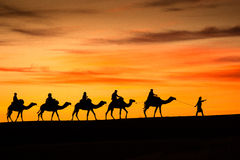 Camels from Sahara Desert. One beautiful camel caravan from Sahara Desert at sunrise, Morocco, Africa Stock Images