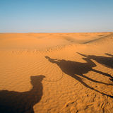Camels in Sahara Royalty Free Stock Photography