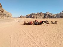 The camels in the sand desert and far sandstone yellow fantastic rocks. royalty free stock photo
