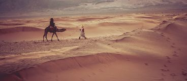 Camels on the sand dunes in the Sahara Desert. Morocco, Africa. Royalty Free Stock Photos