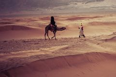 Camels on the sand dunes in the Sahara Desert. Morocco, Africa. Royalty Free Stock Photography