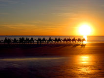 Camels by the sea. A line of camels walking along the coastline Royalty Free Stock Image