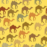 Camels seamless pattern. Background of desert animals. Vector or Stock Photography