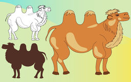 Camels set: colored, cute, silhouette. Royalty Free Stock Images