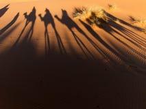 Camels Shadows. Camel trek in Sahara Desert sand dunes, Morocco Royalty Free Stock Image