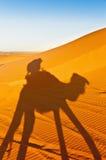 Camels shadows over Erg Chebbi at Morocco stock photos