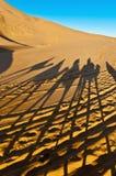 Camels shadows over Erg Chebbi at Morocco stock photo