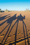 Camels shadows over Erg Chebbi at Morocco Royalty Free Stock Image