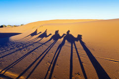 Camels shadows over Erg Chebbi at Morocco royalty free stock photography