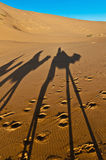 Camels shadows over Erg Chebbi at Morocco Royalty Free Stock Images