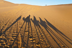 Camels shadows over Erg Chebbi at Morocco royalty free stock photos