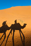 Camels shadows over Erg Chebbi at Morocco stock image