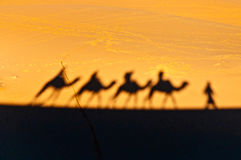 Camels shadows over Erg Chebbi at Morocco stock images