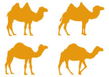 Camels silhouette. Vector file of camels silhouette Stock Photography