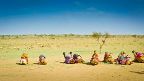 Sitting Camels Royalty Free Stock Photography