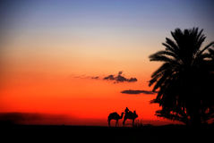 Camels in sunset. Long exposure photo of a some camels in the desert during sunset Stock Photo